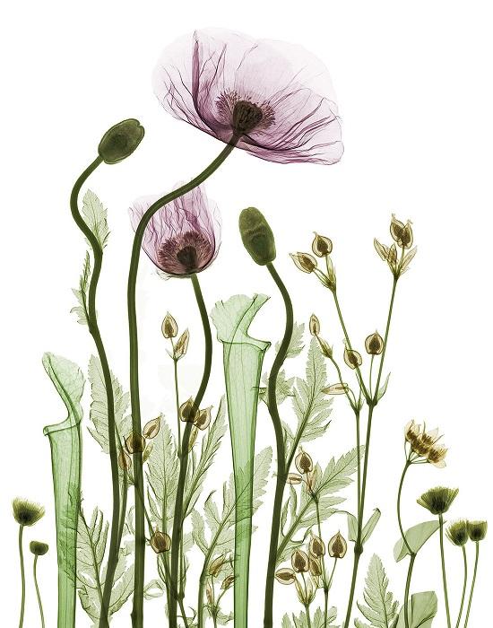 bryan-whitney-x-ray-garden