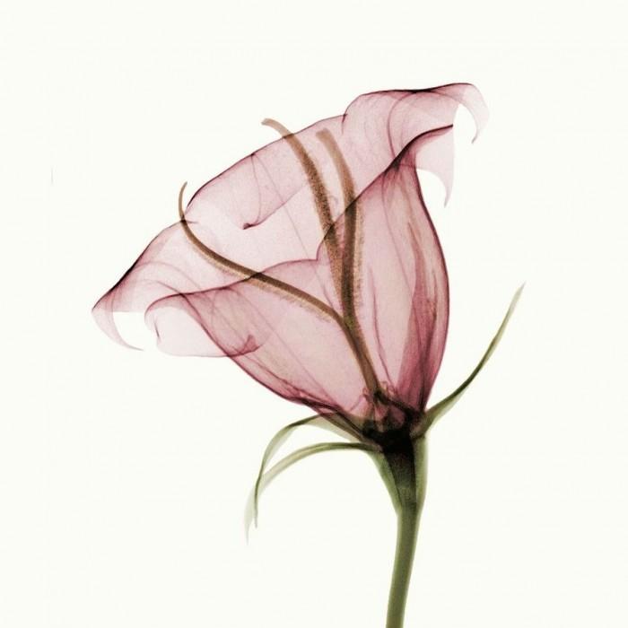 flower_x_ray_by_coopr-d3fb53n